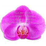 Carton d'invitation Orchidée Couleur Fuschia